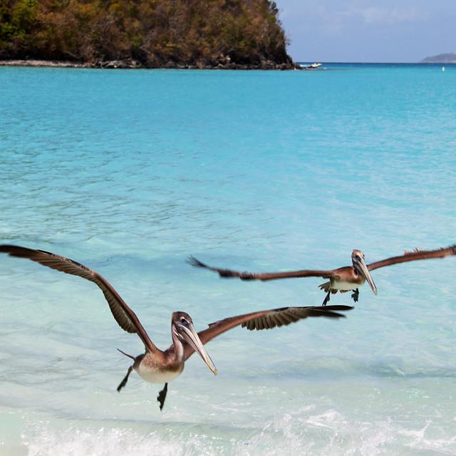 """Maho bay,Saint John, US Virgin Islands"" stock image"