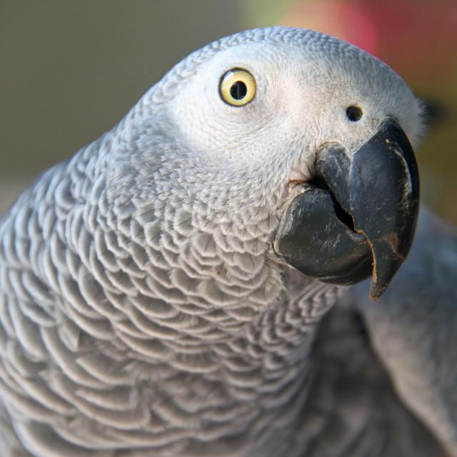 """Parrot, Westin Saint John"" stock image"