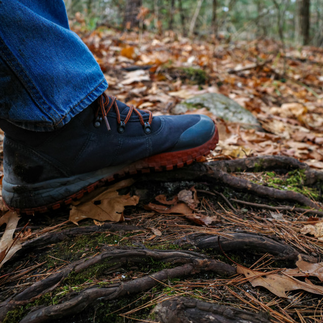 """Hiker's boot steps on tree roots on hiking trail"" stock image"