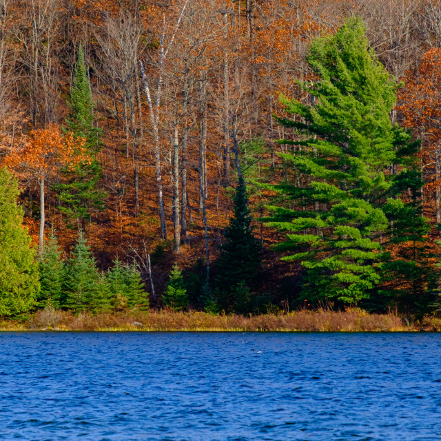 """Evergreens amid orange leaves across a lake"" stock image"