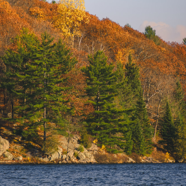 """Autumn trees on lakeside rocky hills"" stock image"