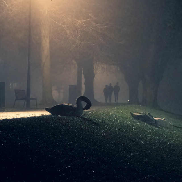 """""""Foggy late night walk by The River Cam, Cambridge UK."""" stock image"""