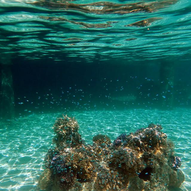"""Snorkeling Moorea"" stock image"