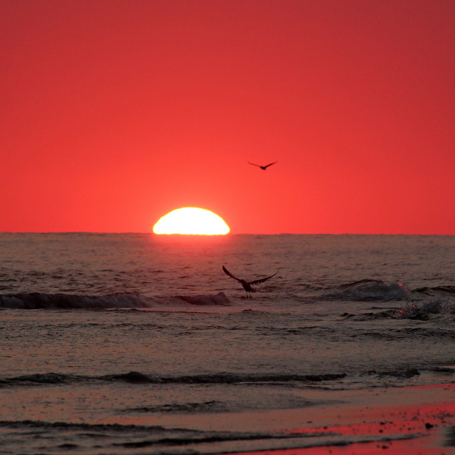 """Sunset with seagulls, bald head Island North Carolina"" stock image"