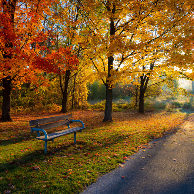 """""""Bench with a View"""" stock image"""