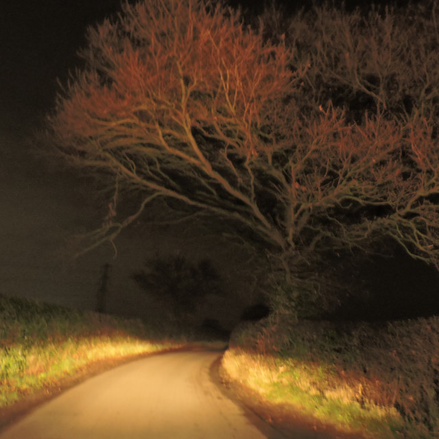 """""""Trees at night Middleton Staffordshire"""" stock image"""