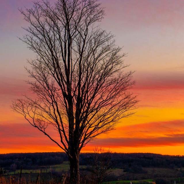 """Ravenna Sunset 855"" stock image"