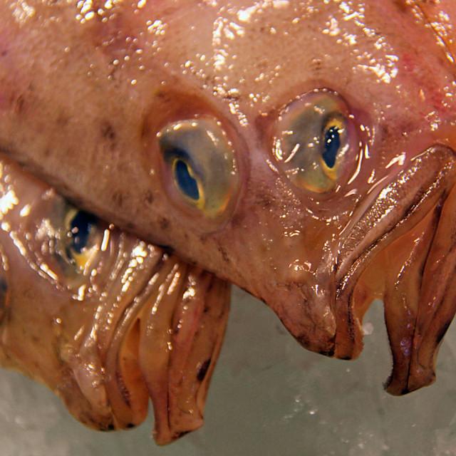 """""""Flounder, seafood, Barcelona"""" stock image"""