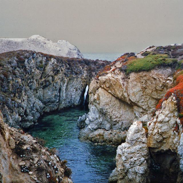 """Point Lobos State Park, big sur, California"" stock image"