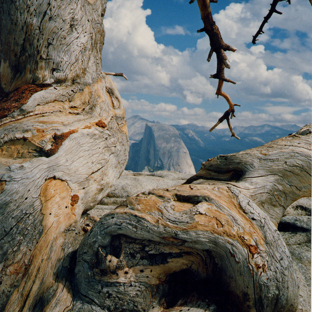 """""""Jeffrey pine and half dome from Sentinal dome, Yosemite national park"""" stock image"""