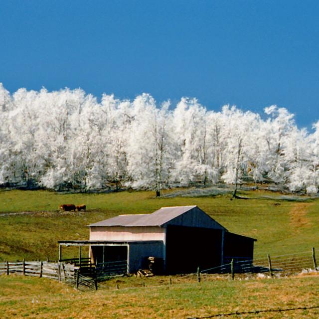 """""""Hoar Frost, poor mountain, Virginia"""" stock image"""