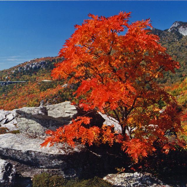 """Tanawha Trail,Grandfather mountain"" stock image"