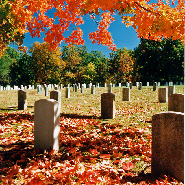 """""""Sugar maple and cemetery, Greensboro North Carolina"""" stock image"""