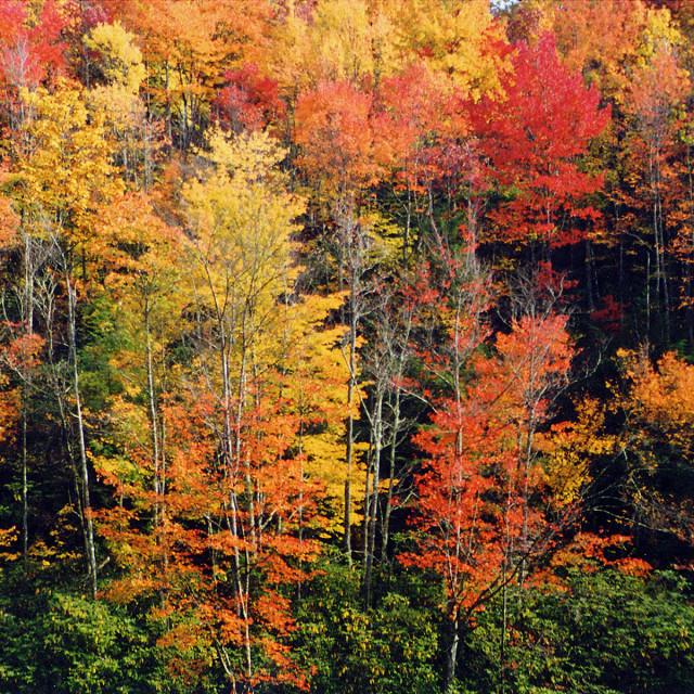 """Fall color, Blue Ridge Parkway, NC"" stock image"