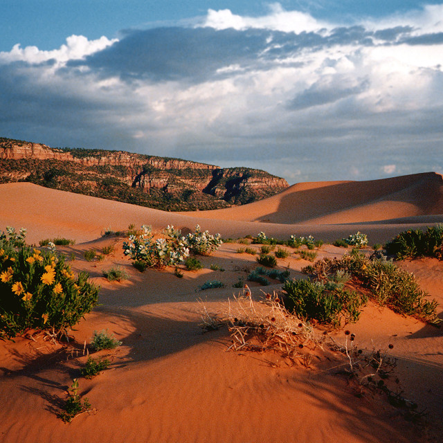 """Coral pink sand dunes, Utah"" stock image"