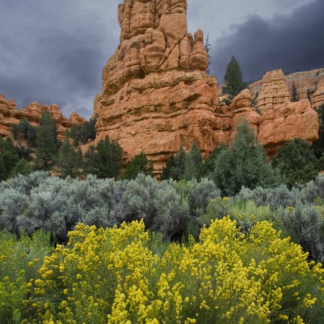 """""""Red rock State Park, Utah"""" stock image"""