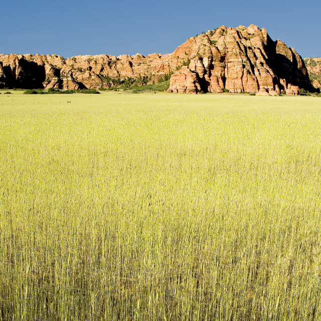 """Kolob Canyon Zion national"" stock image"
