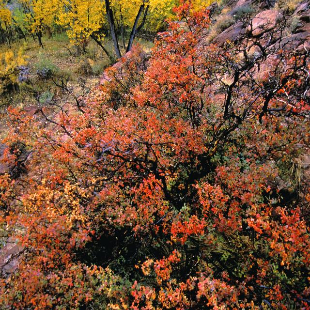 """""""Fruita, capitol reef national Park, Utah"""" stock image"""