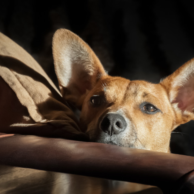 """dog head in sunlight"" stock image"