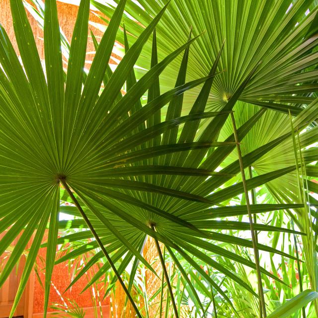 """""""Palm leaves, Hotel, riviera Maya"""" stock image"""