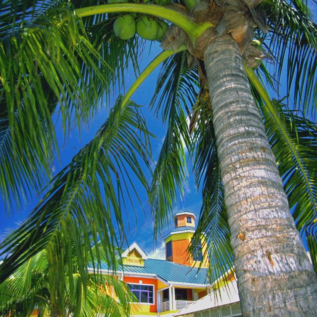 """""""Market, Nassau, Bahamas"""" stock image"""