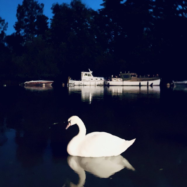 """""""The Swan"""" stock image"""