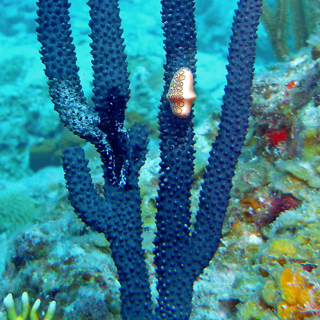 """Sea slug and coral"" stock image"