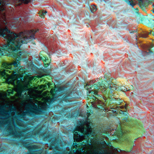 """Corals"" stock image"
