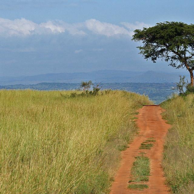 """African plain"" stock image"