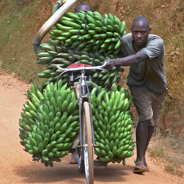 """Bicycles and bananas"" stock image"