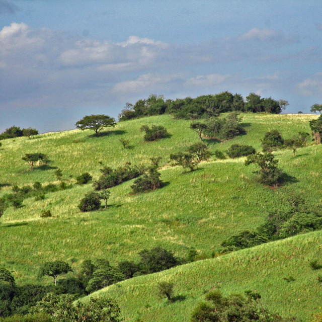 """Rolling Hills, Uganda"" stock image"