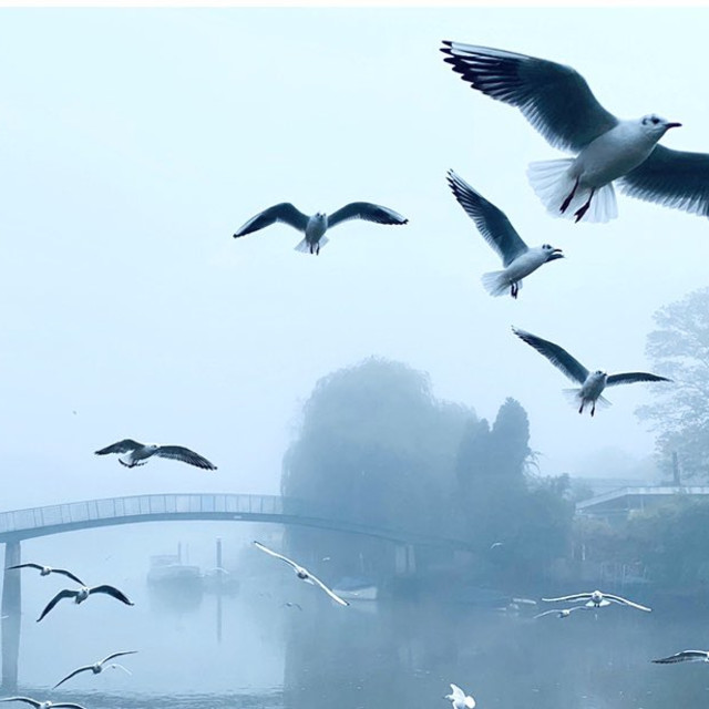 """""""Seagulls in the Mist"""" stock image"""