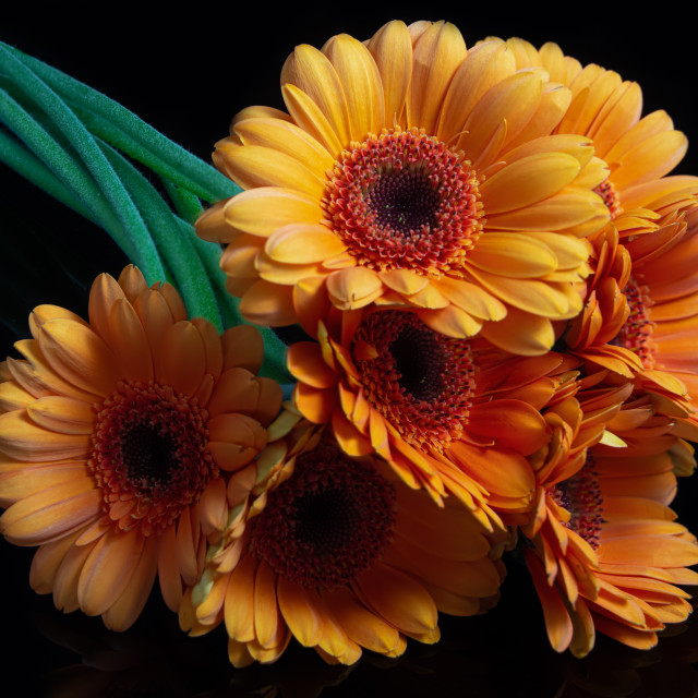"""""""I bought you flowers, some Orange Germinis"""" stock image"""