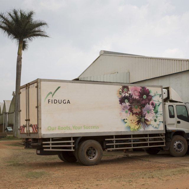 """""""Flower Industry in Uganda - Production for Europe"""" stock image"""
