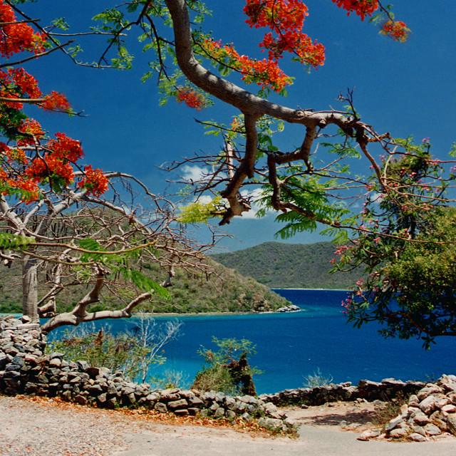 """Annabelle plantation, Saint John, US Virgin Islands"" stock image"