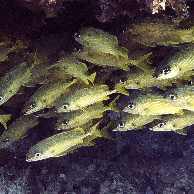 """""""Striped Grunts, coral reeF"""" stock image"""