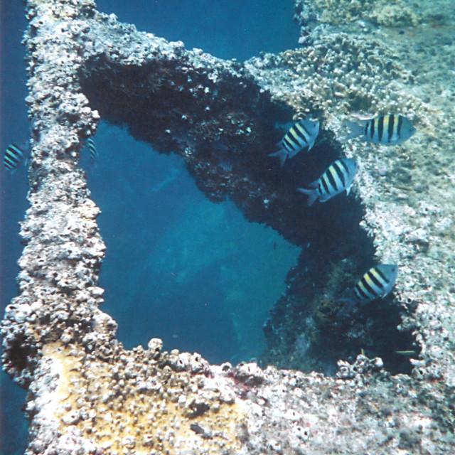 """Shipwreck, Aruba"" stock image"