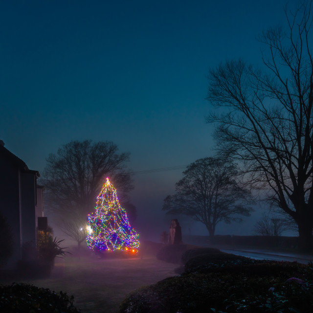 """Gatehouse farm Christmas tree"" stock image"