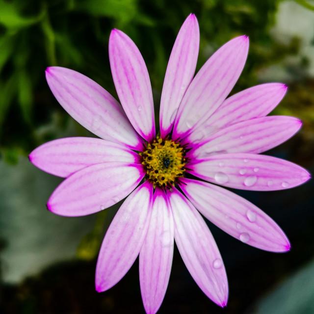 """Wildflower"" stock image"
