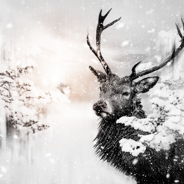 """""""Male stag"""" stock image"""