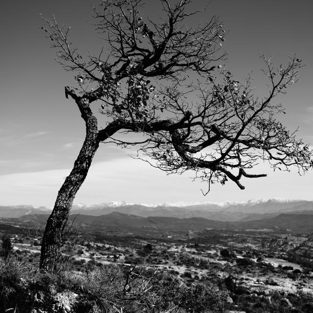 """Lonely tree"" stock image"