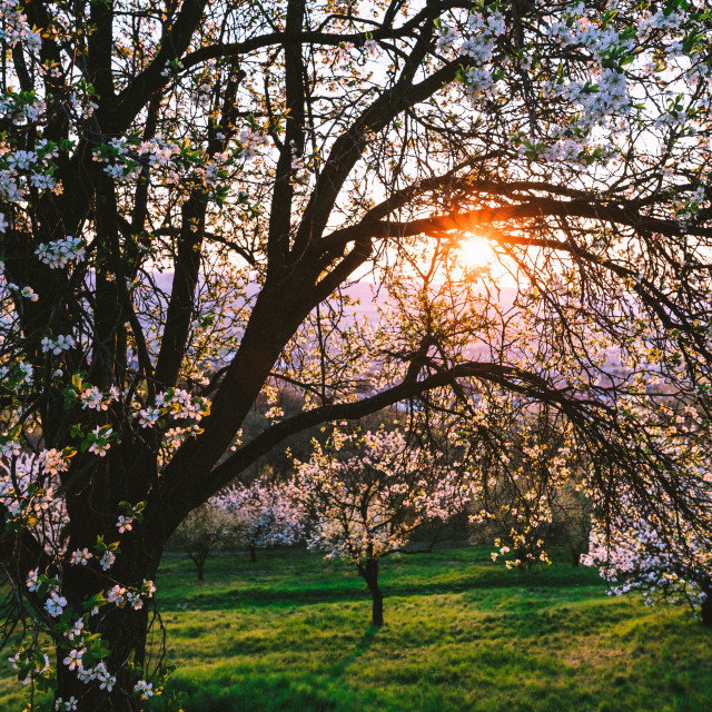 """""""Spring is here"""" stock image"""
