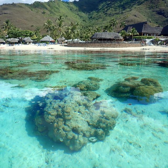 """Coral reef, bora-Bora"" stock image"