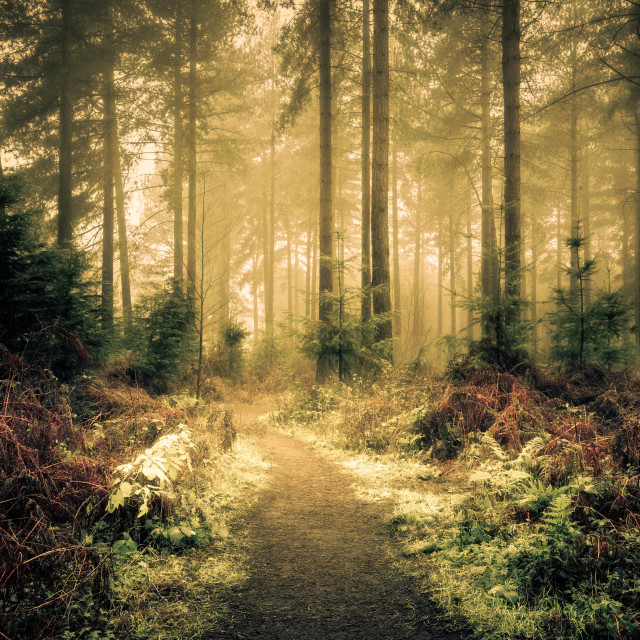 """Woodland Path in Wheldrake Wood"" stock image"