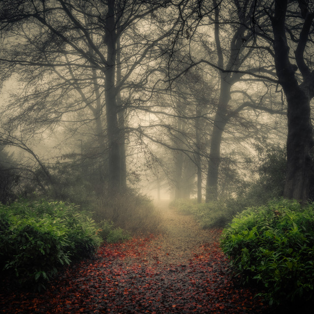 """Woodland Path in the Mist"" stock image"