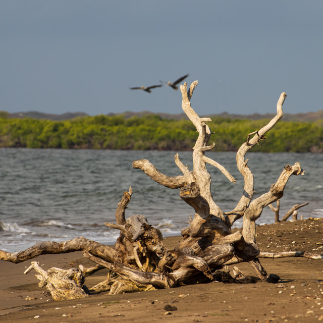 """""""Old Tree on a beach"""" stock image"""