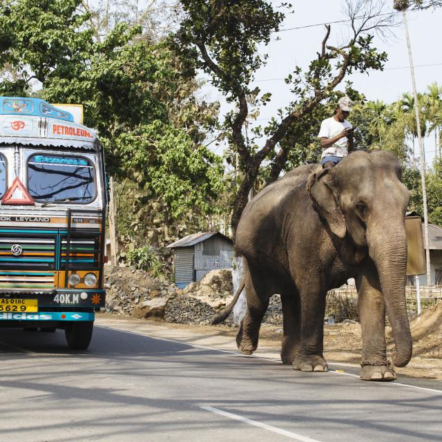 """Kaziranga Nationalpark"" stock image"
