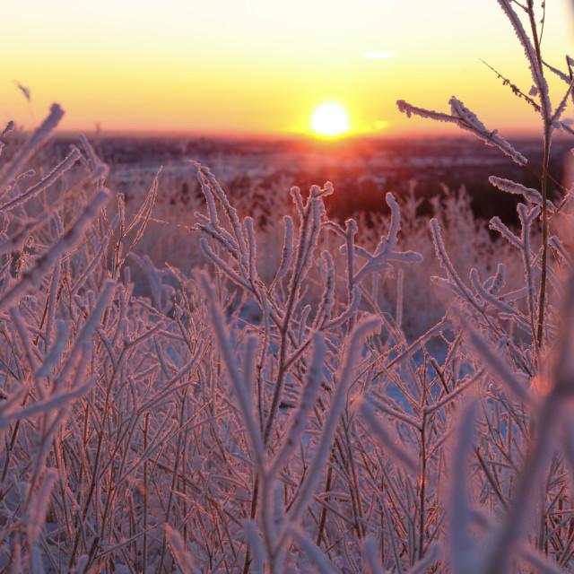 """""""Frosty sunrise"""" stock image"""