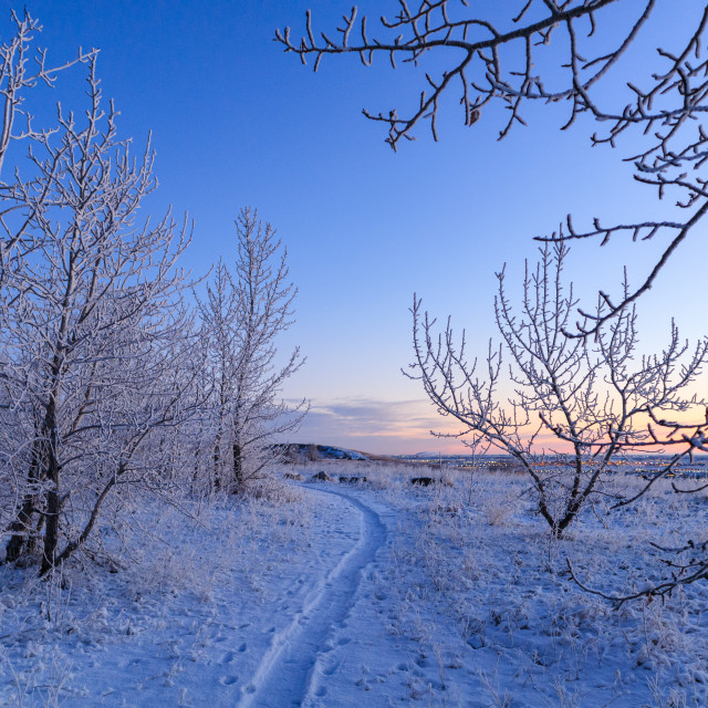 """""""Wintry footpath"""" stock image"""