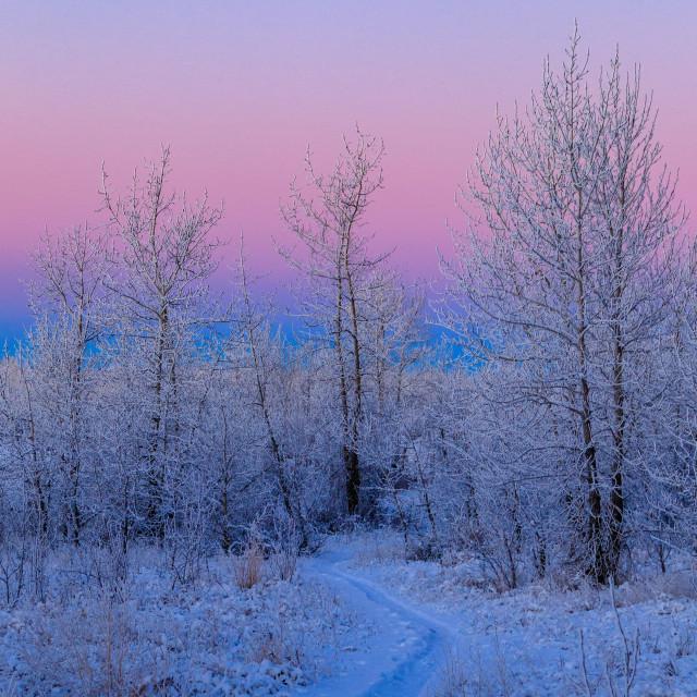 """""""Frosty Landscape"""" stock image"""
